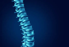 Human Spine concept as medical health care anatomy symbol with the skeletal spinal bone structure closeup on a dark blue background.