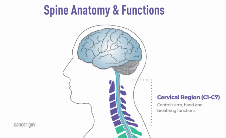 Brain and Spine Tumor Anatomy and Functions